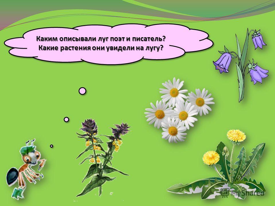 Какие растения они увидели на лугу
