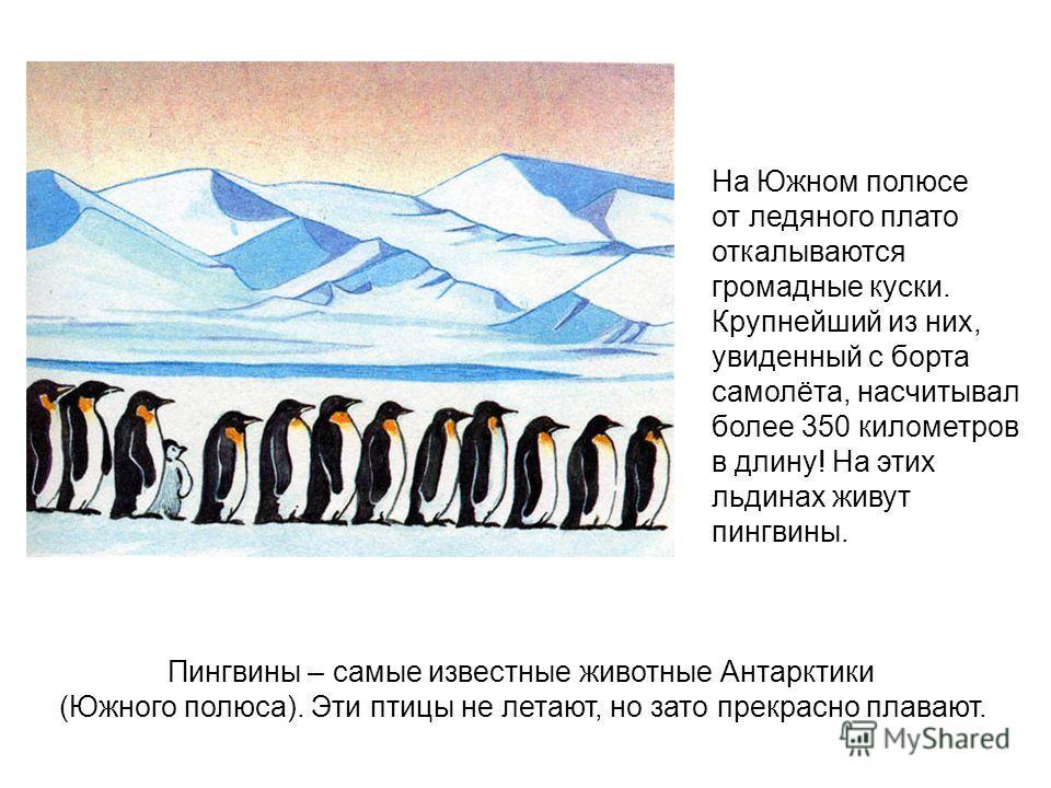 На Южном полюсе от ледяного плато откалываются громадные куски. Крупнейший из них, увиденный с борта самолёта, насчитывал более 350 километров в длину! На этих льдинах живут пингвины. Пингвины – самые известные животные Антарктики (Южного полюса). Эт