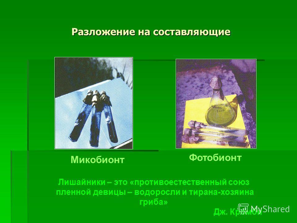 Разложение на составляющие Микобионт Фотобионт Лишайники – это «противоестественный союз пленной девицы – водоросли и тирана-хозяина гриба» Дж. Кромби