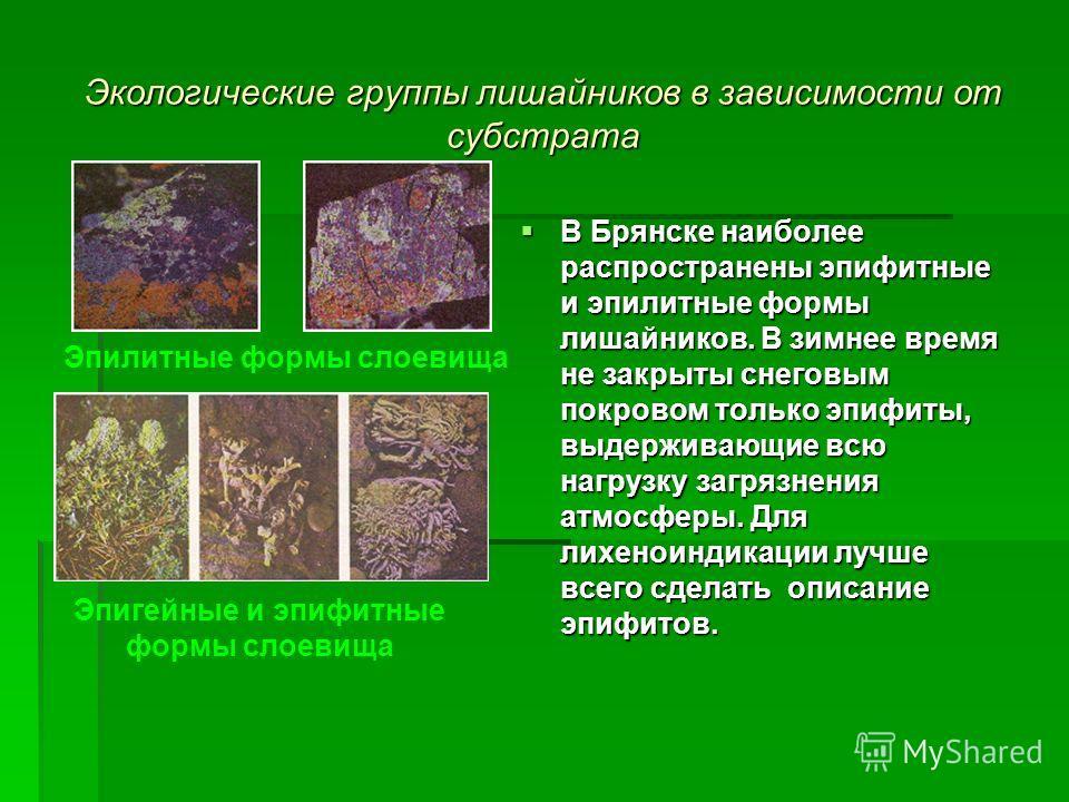 Экологические группы лишайников в зависимости от субстрата В Брянске наиболее распространены эпифитные и эпилитные формы лишайников. В зимнее время не закрыты снеговым покровом только эпифиты, выдерживающие всю нагрузку загрязнения атмосферы. Для лих