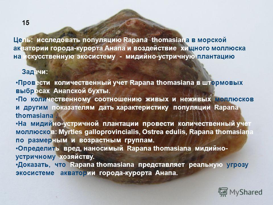 Цель: исследовать популяцию Rapana thomasiana в морской акватории города-курорта Анапа и воздействие хищного моллюска на искусственную экосистему - мидийно-устричную плантацию Провести количественный учет Rapana thomasiana в штормовых выбросах Анапск