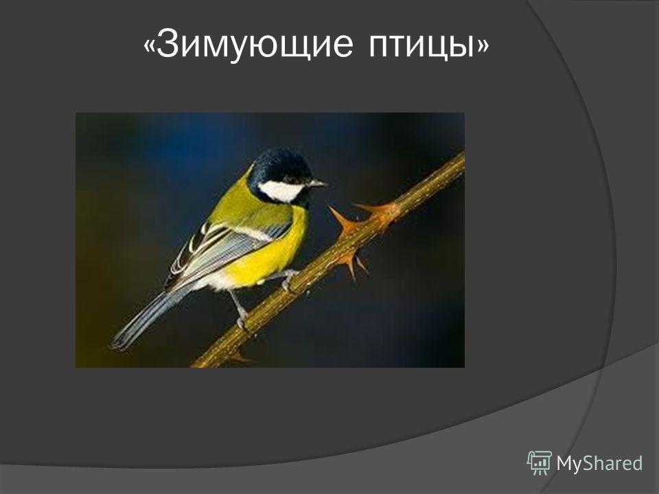 «Зимующие птицы»