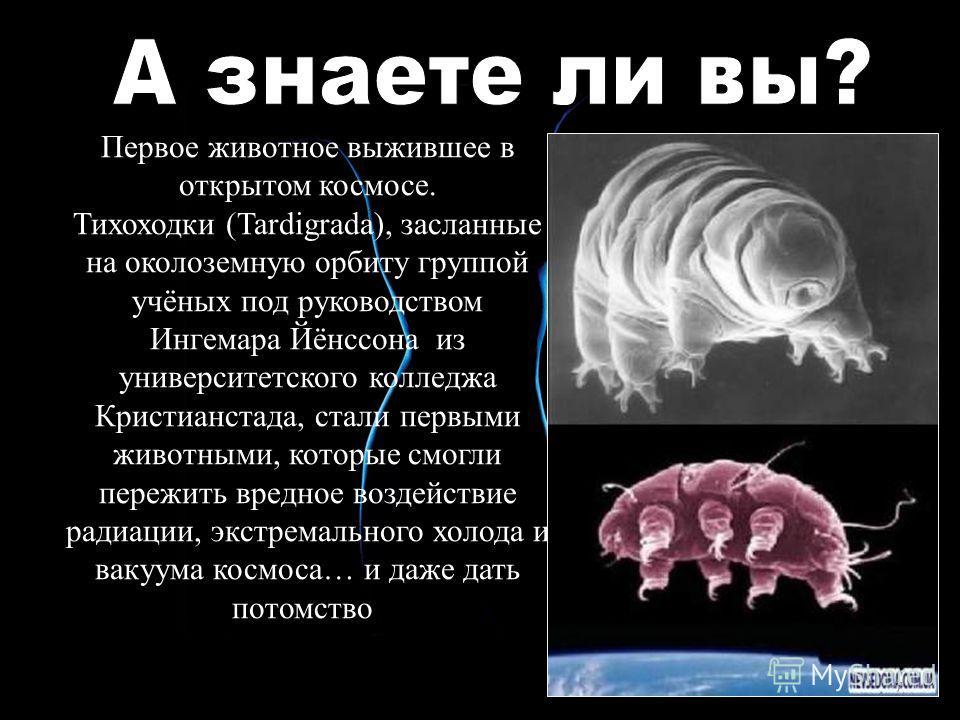Первое животное выжившее в открытом космосе. Тихоходки (Tardigrada), засланные на околоземную орбиту группой учёных под руководством Ингемара Йёнссона из университетского колледжа Кристианстада, стали первыми животными, которые смогли пережить вредно