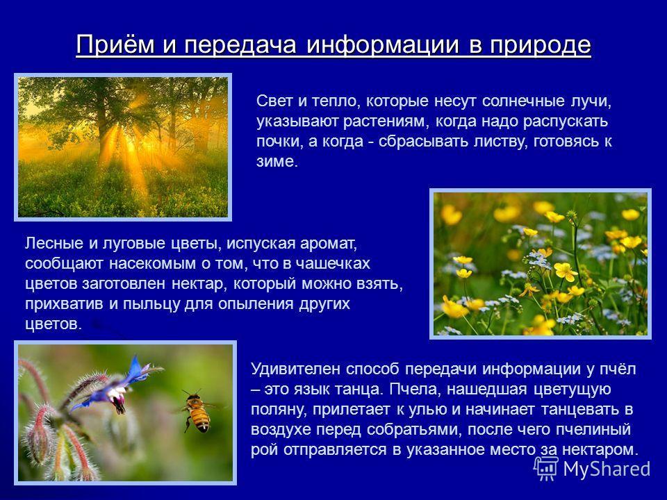 Приём и передача информации в природе Лесные и луговые цветы, испуская аромат, сообщают насекомым о том, что в чашечках цветов заготовлен нектар, который можно взять, прихватив и пыльцу для опыления других цветов. Свет и тепло, которые несут солнечны