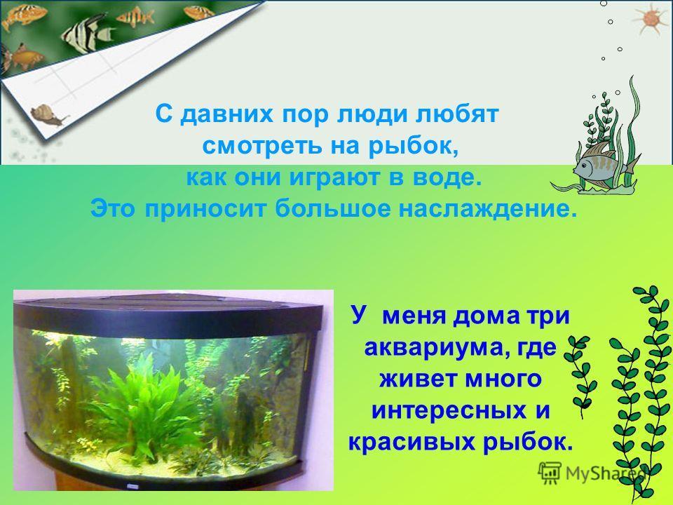 У меня дома три аквариума, где живет много интересных и красивых рыбок. С давних пор люди любят смотреть на рыбок, как они играют в воде. Это приносит большое наслаждение.