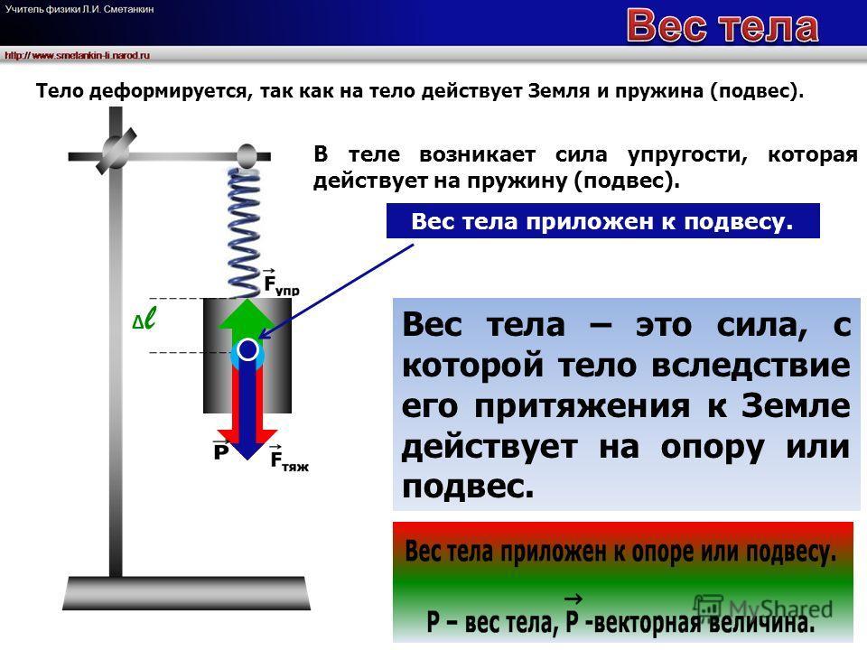l В теле возникает сила упругости, которая действует на пружину (подвес). Вес тела приложен к подвесу. Вес тела – это сила, с которой тело вследствие его притяжения к Земле действует на опору или подвес. Тело деформируется, так как на тело действует