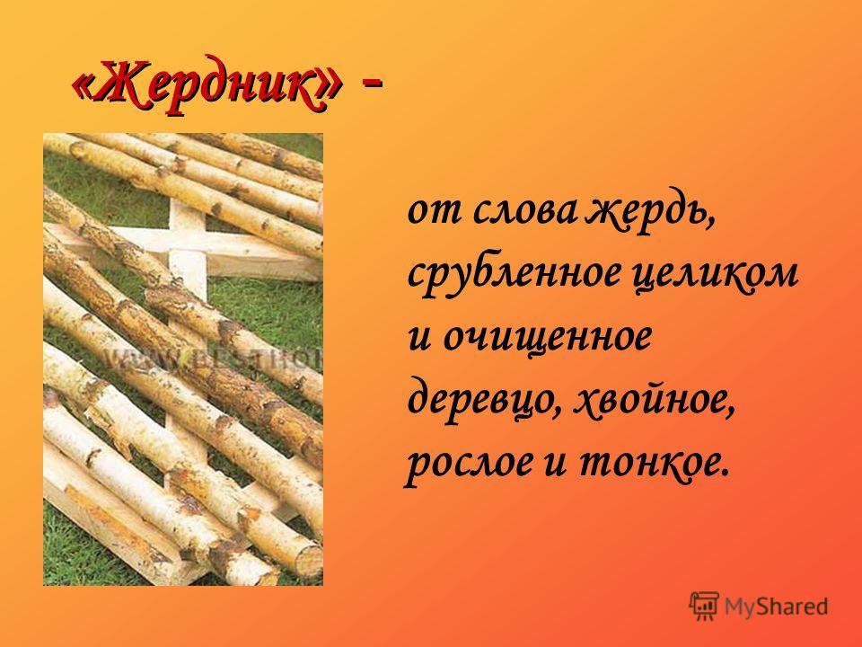 «Жердник » - от слова жердь, срубленное целиком и очищенное деревцо, хвойное, рослое и тонкое.