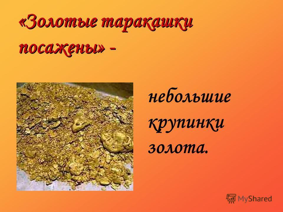 «Золотые таракашки посажены» - небольшие крупинки золота.