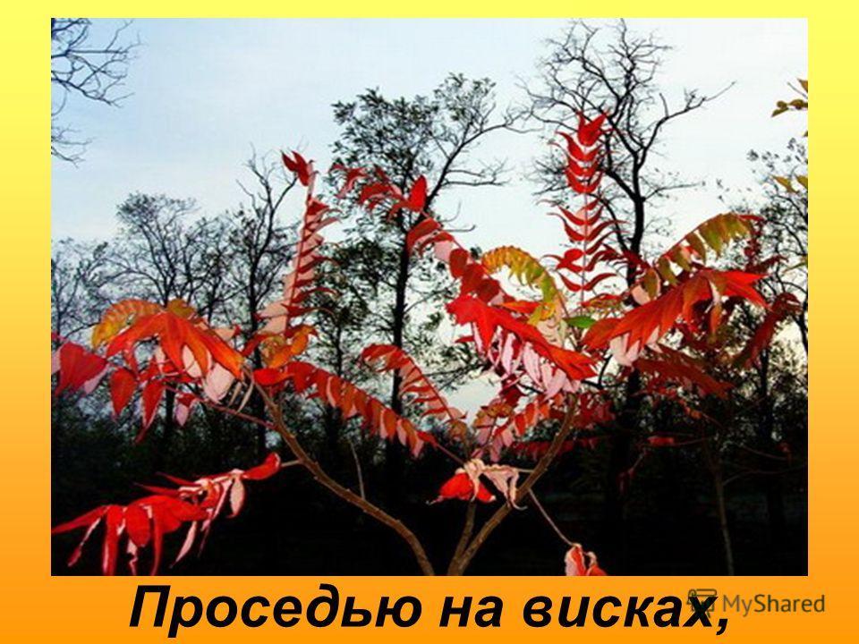 Золотом листопада,