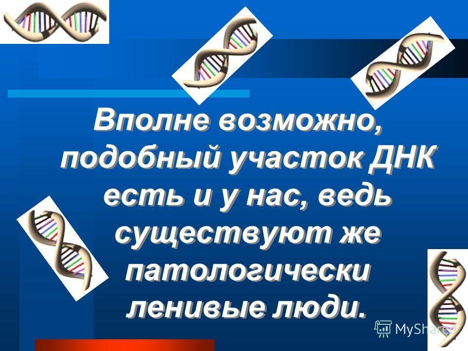 Отключение гена привело к заметным изменениям в отношении обезьян к труду Отключение гена привело к заметным изменениям в отношении обезьян к труду Отключение гена привело к заметным изменениям в отношении обезьян к труду Лень у приматов