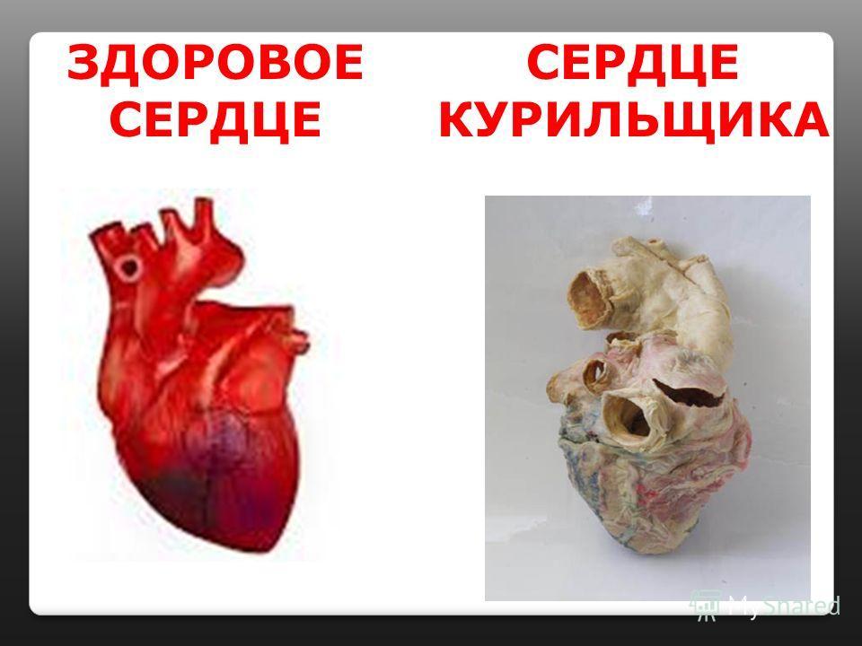 ЗДОРОВОЕ СЕРДЦЕ СЕРДЦЕ КУРИЛЬЩИКА