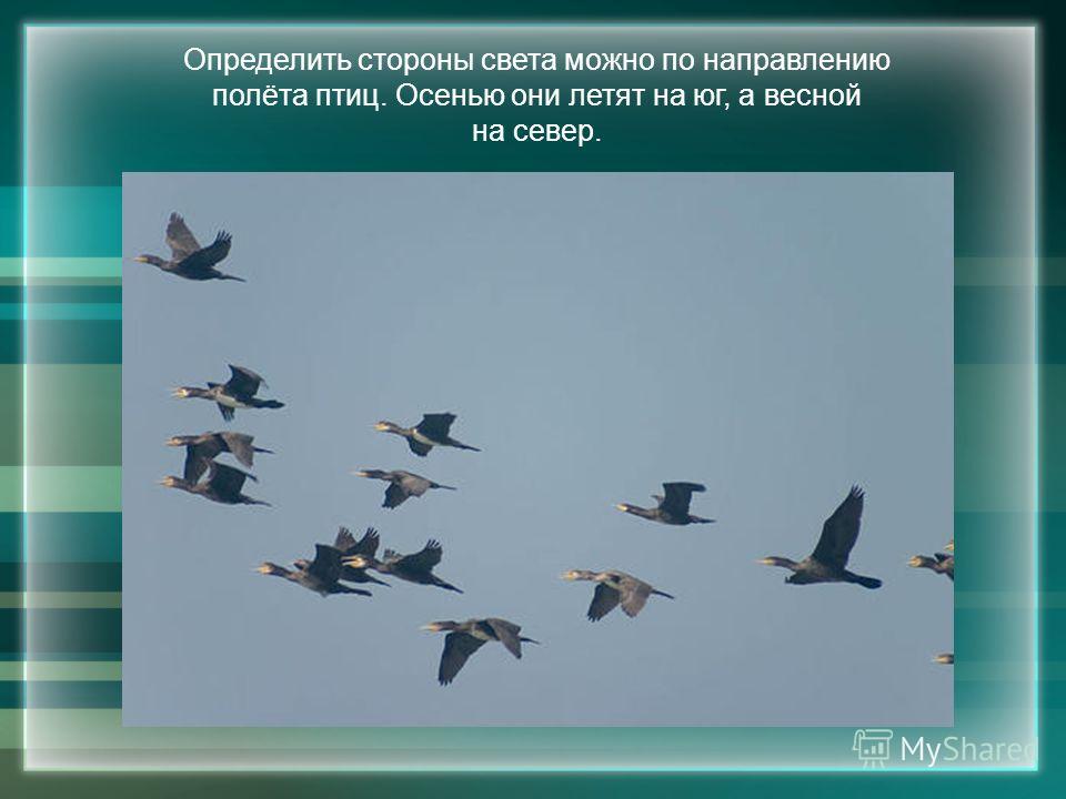 Определить стороны света можно по направлению полёта птиц. Осенью они летят на юг, а весной на север.