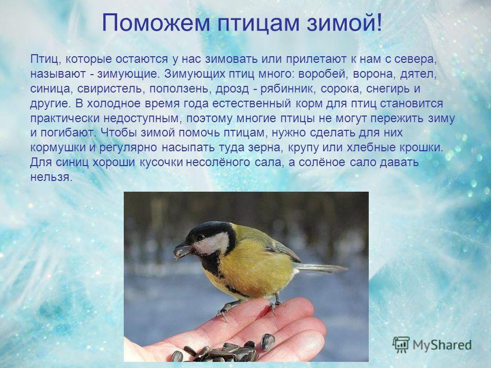 Поможем птицам зимой! Птиц, которые остаются у нас зимовать или прилетают к нам с севера, называют - зимующие. Зимующих птиц много: воробей, ворона, дятел, синица, свиристель, поползень, дрозд - рябинник, сорока, снегирь и другие. В холодное время го