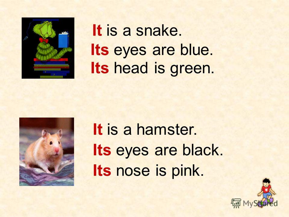 It is a snake. Its eyes are blue. Its head is green. It is a hamster. Its eyes are black. Its nose is pink.