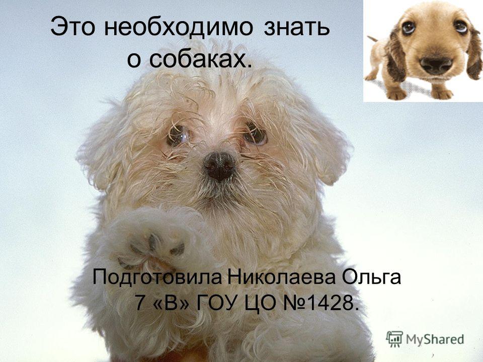 Это необходимо знать о собаках. Подготовила Николаева Ольга 7 «В» ГОУ ЦО 1428.