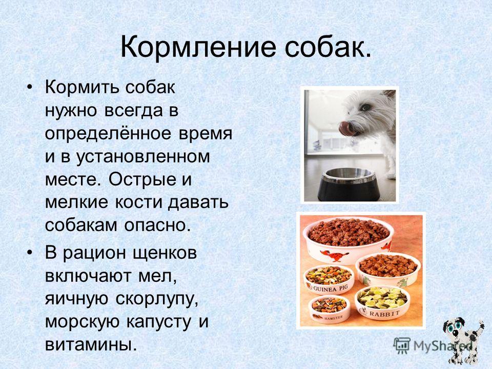 Кормление собак. Кормить собак нужно всегда в определённое время и в установленном месте. Острые и мелкие кости давать собакам опасно. В рацион щенков включают мел, яичную скорлупу, морскую капусту и витамины.