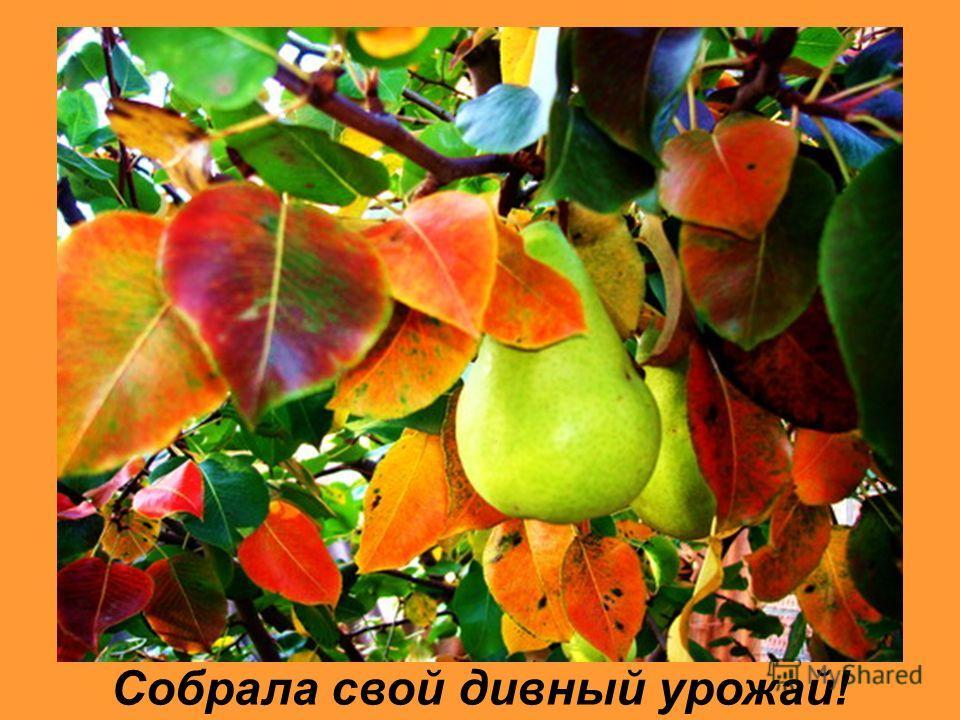 Золотая осень-дароносица