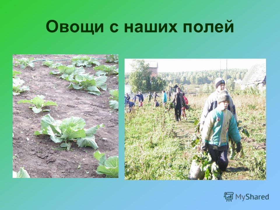 Овощи с наших полей