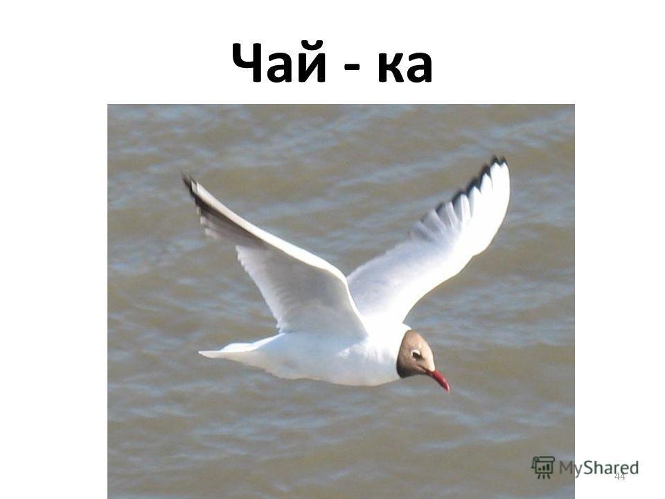 Чай - ка 44