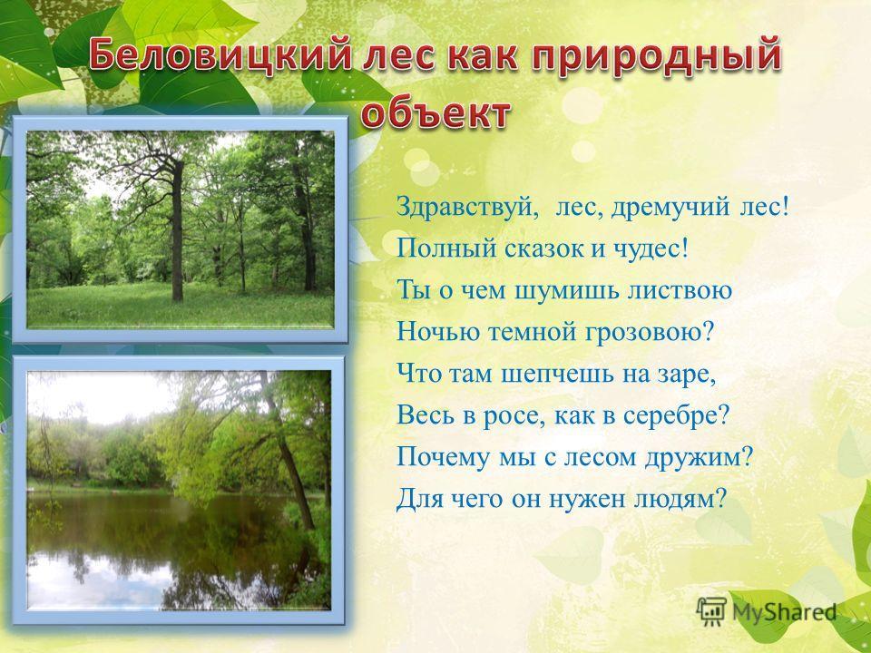 Здравствуй, лес, дремучий лес! Полный сказок и чудес! Ты о чем шумишь листвою Ночью темной грозовою? Что там шепчешь на заре, Весь в росе, как в серебре? Почему мы с лесом дружим? Для чего он нужен людям?