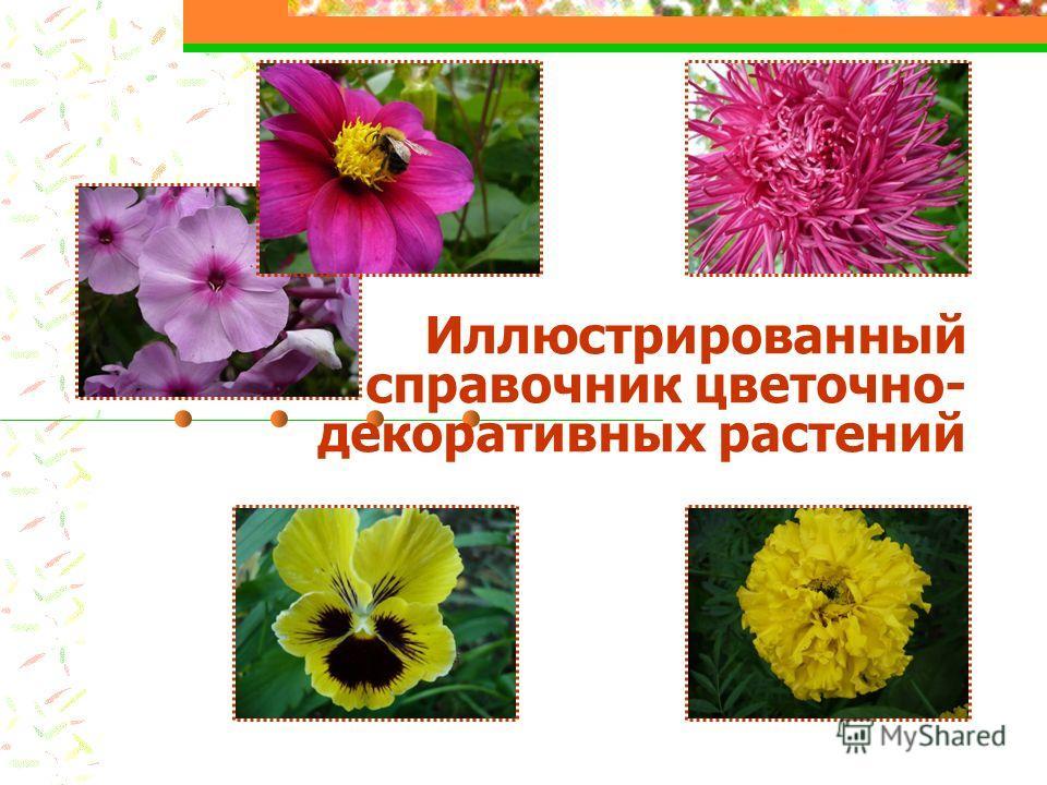 Иллюстрированный справочник цветочно- декоративных растений