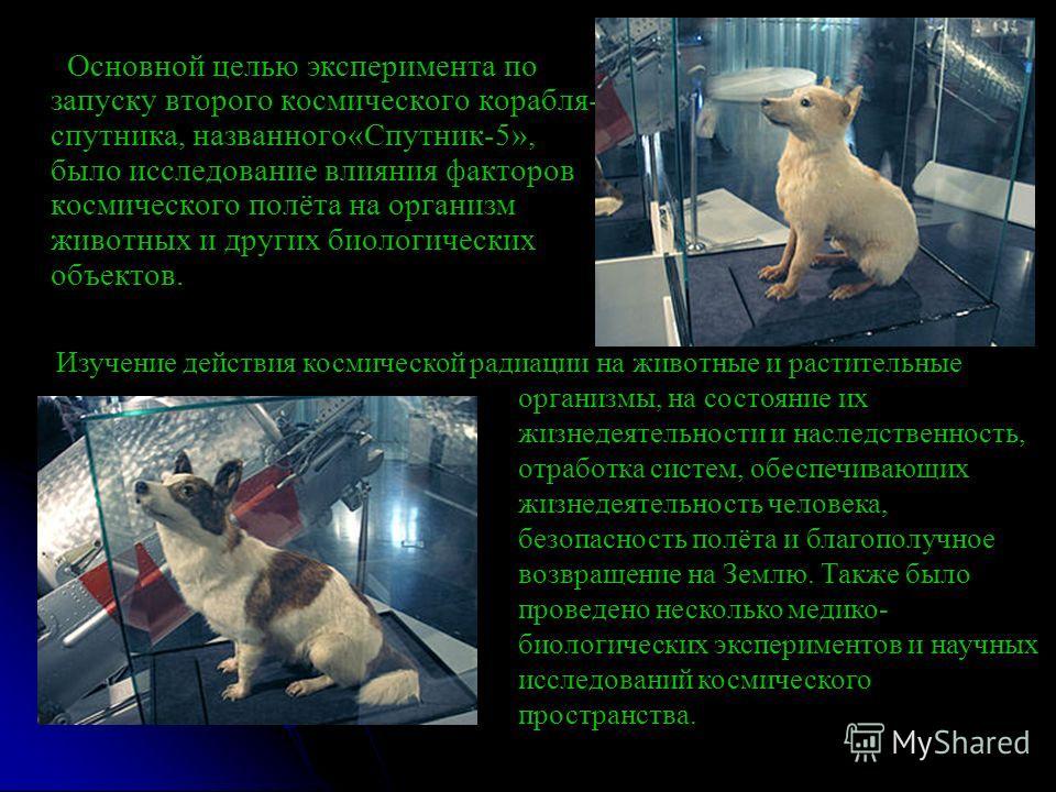 Основной целью эксперимента по запуску второго космического корабля- спутника, названного«Спутник-5», было исследование влияния факторов космического полёта на организм животных и других биологических объектов. Изучение действия космической радиации