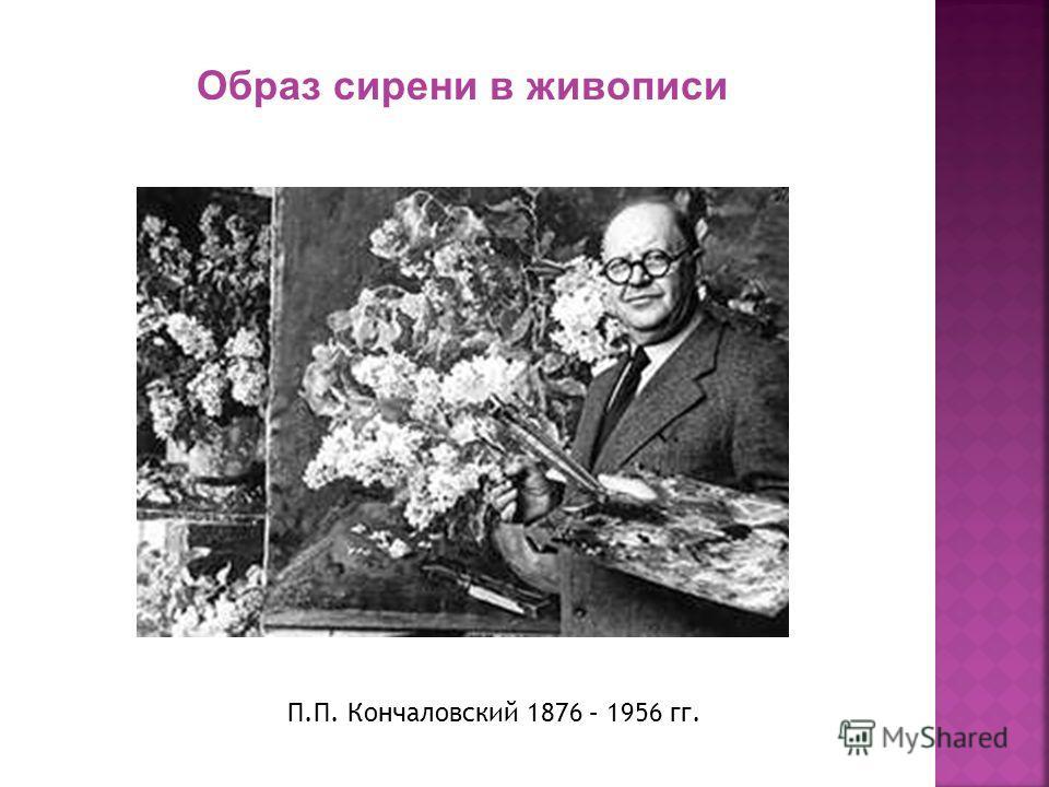 П.П. Кончаловский 1876 – 1956 гг. Образ сирени в живописи