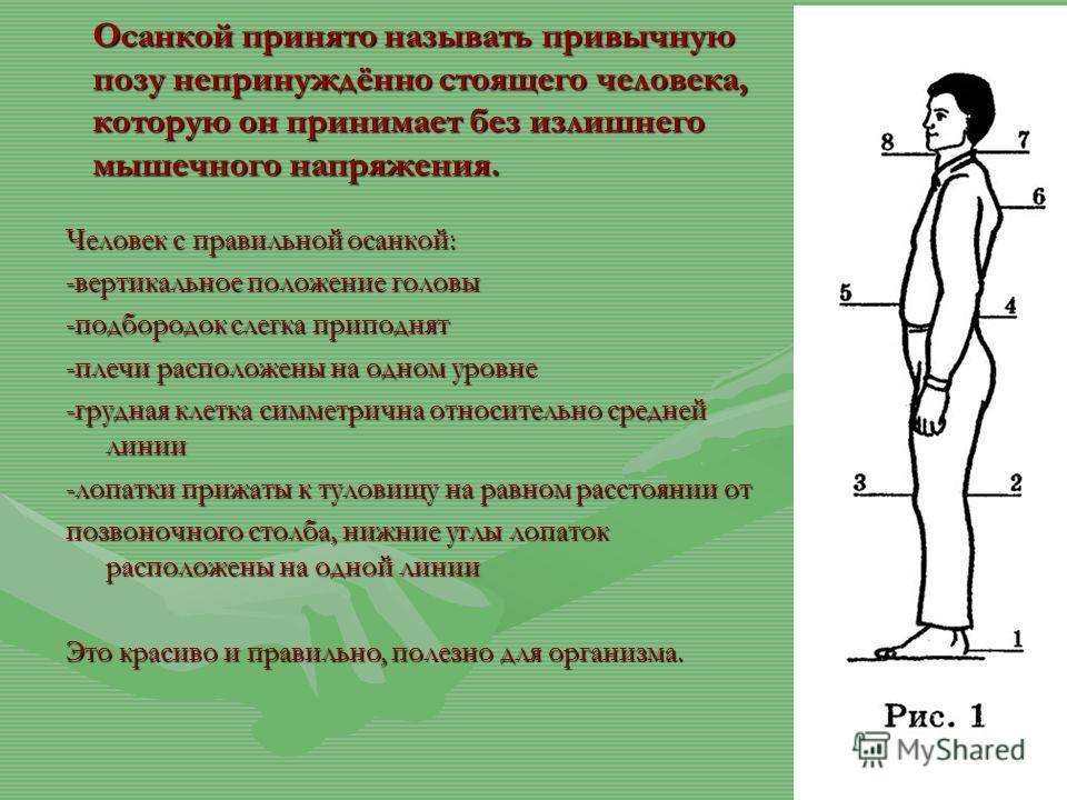 Осанкой принято называть привычную позу непринуждённо стоящего человека, которую он принимает без излишнего мышечного напряжения. Человек с правильной осанкой: -вертикальное положение головы -подбородок слегка приподнят -плечи расположены на одном ур