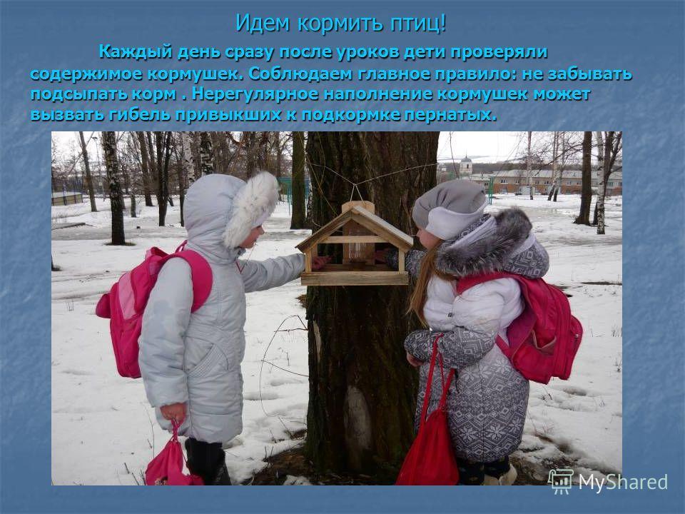 Идем кормить птиц! Каждый день сразу после уроков дети проверяли содержимое кормушек. Соблюдаем главное правило: не забывать подсыпать корм. Нерегулярное наполнение кормушек может вызвать гибель привыкших к подкормке пернатых.