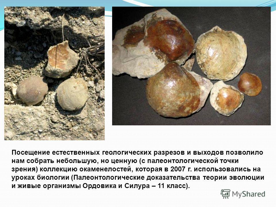 Посещение естественных геологических разрезов и выходов позволило нам собрать небольшую, но ценную (с палеонтологической точки зрения) коллекцию окаменелостей, которая в 2007 г. использовались на уроках биологии (Палеонтологические доказательства тео