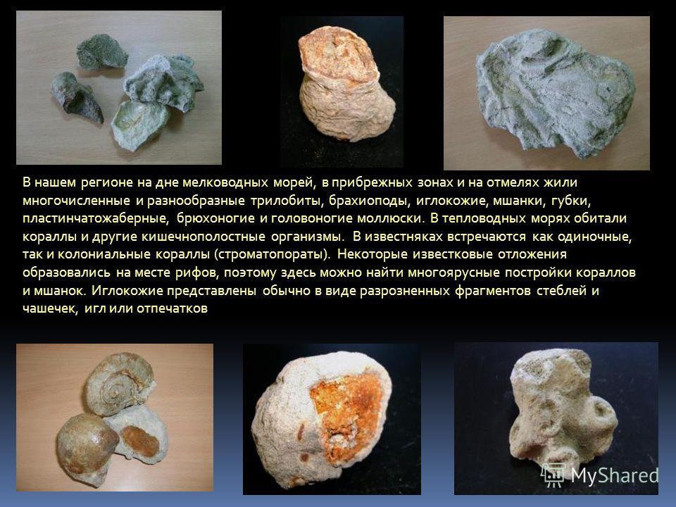В нашем регионе на дне мелководных морей, в прибрежных зонах и на отмелях жили многочисленные и разнообразные трилобиты, брахиоподы, иглокожие, мшанки, губки, пластинчатожаберные, брюхоногие и головоногие моллюски. В тепловодных морях обитали кораллы