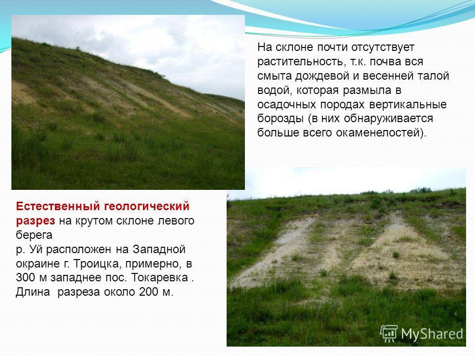 Естественный геологический разрез на крутом склоне левого берега р. Уй расположен на Западной окраине г. Троицка, примерно, в 300 м западнее пос. Токаревка. Длина разреза около 200 м. На склоне почти отсутствует растительность, т.к. почва вся смыта д
