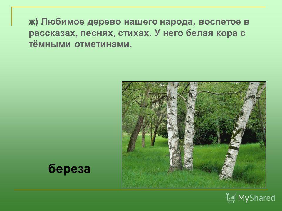 ж) Любимое дерево нашего народа, воспетое в рассказах, песнях, стихах. У него белая кора с тёмными отметинами. береза