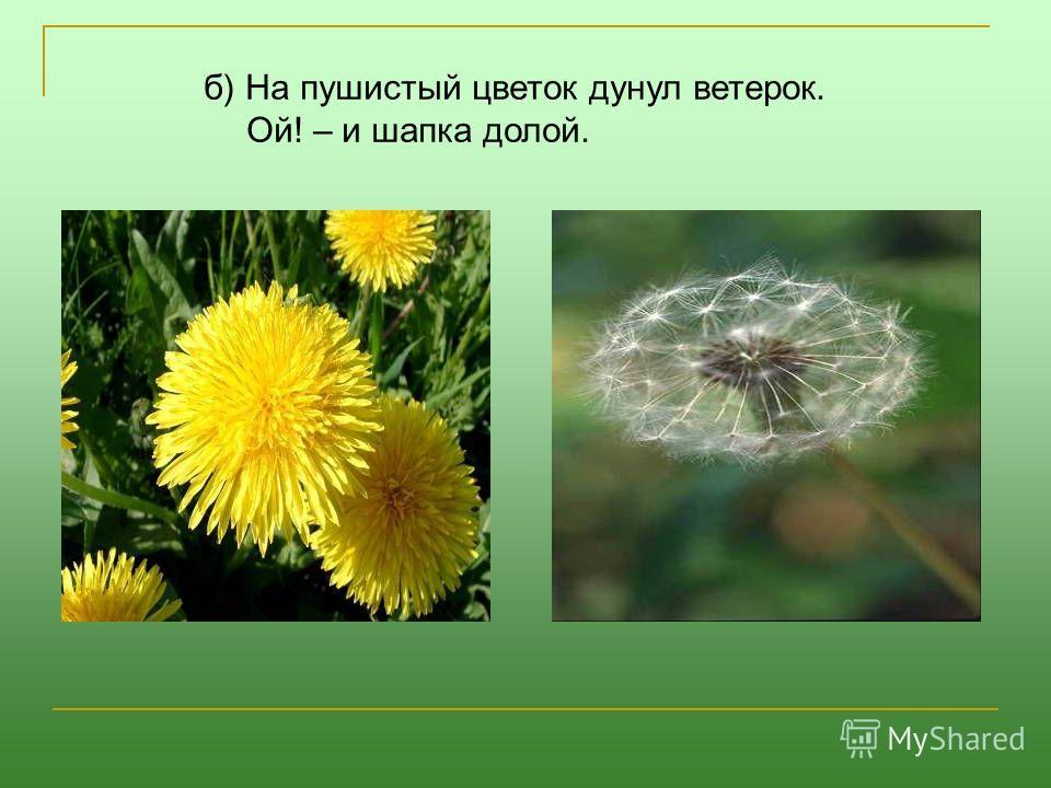 б) На пушистый цветок дунул ветерок. Ой! – и шапка долой.