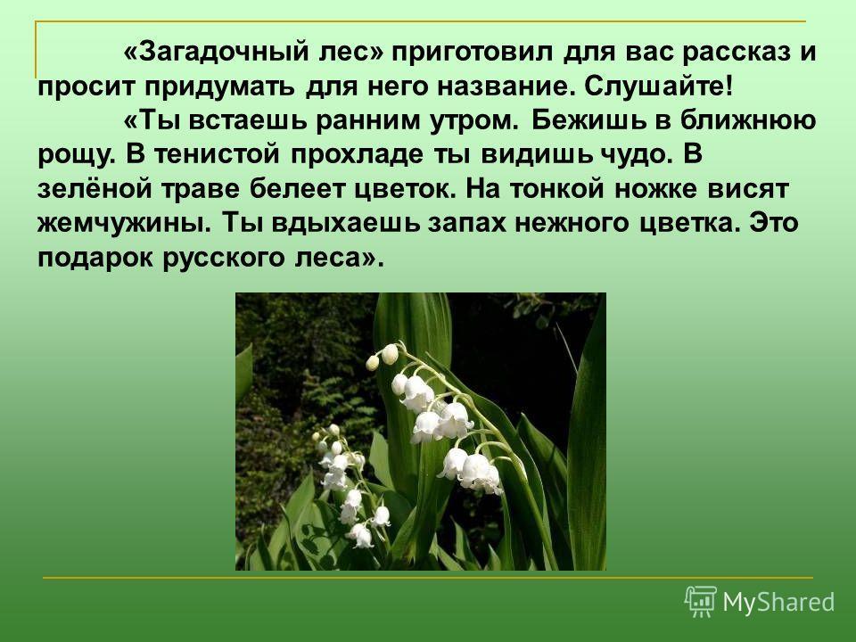 «Загадочный лес» приготовил для вас рассказ и просит придумать для него название. Слушайте! «Ты встаешь ранним утром. Бежишь в ближнюю рощу. В тенистой прохладе ты видишь чудо. В зелёной траве белеет цветок. На тонкой ножке висят жемчужины. Ты вдыхае