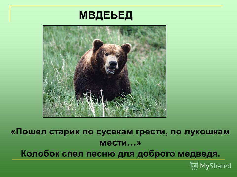 МВДЕЬЕД «Пошел старик по сусекам грести, по лукошкам мести…» Колобок спел песню для доброго медведя.