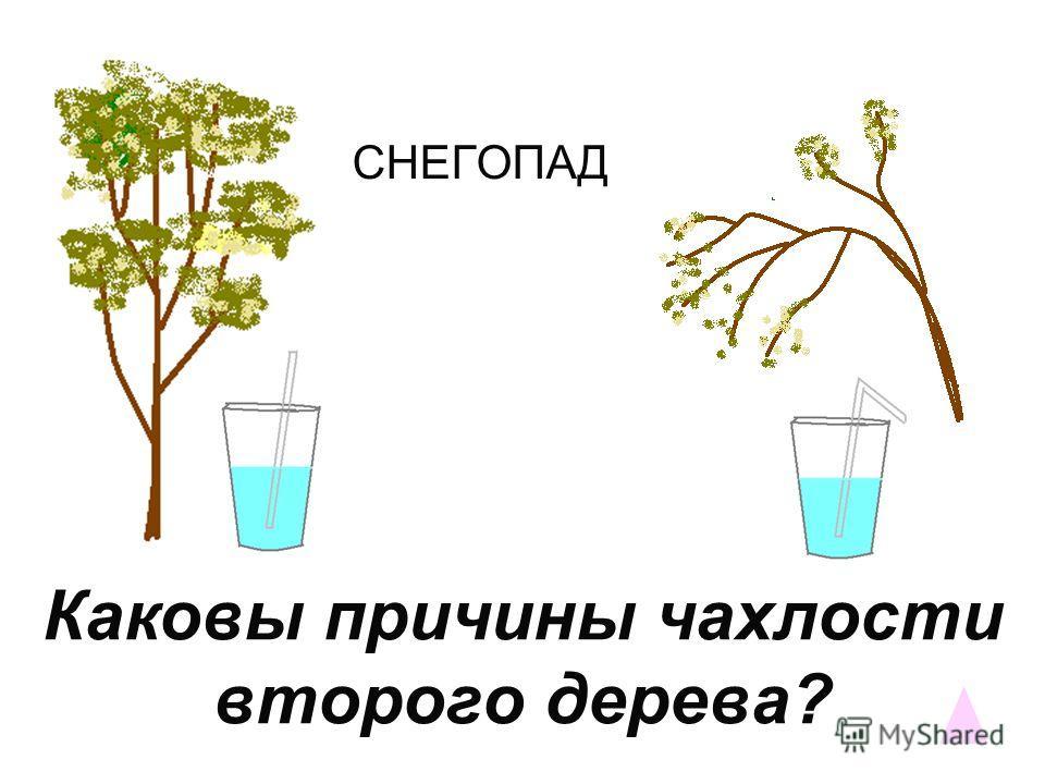 Откуда растения знают, что нужно готовиться к зиме?