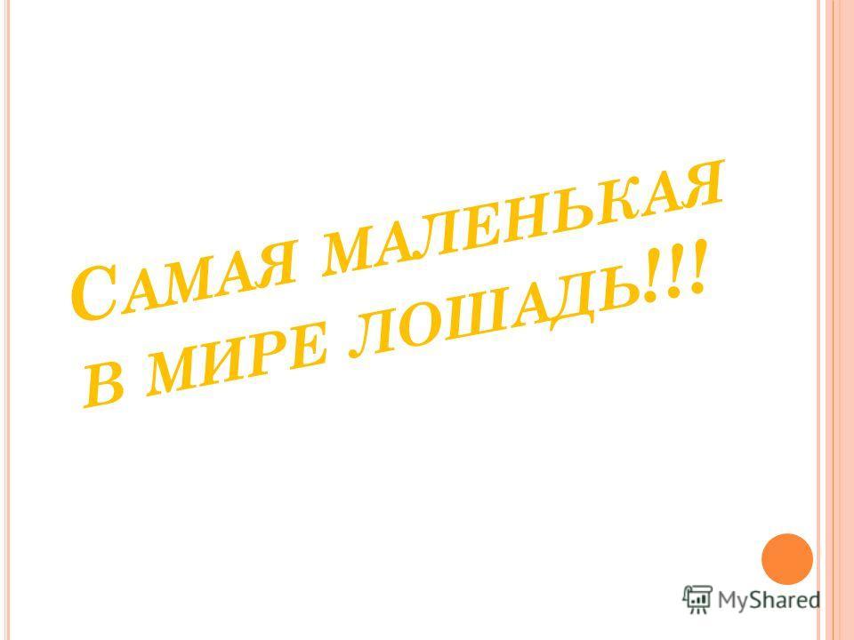 С АМАЯ МАЛЕНЬКАЯ В МИРЕ ЛОШАДЬ !!!