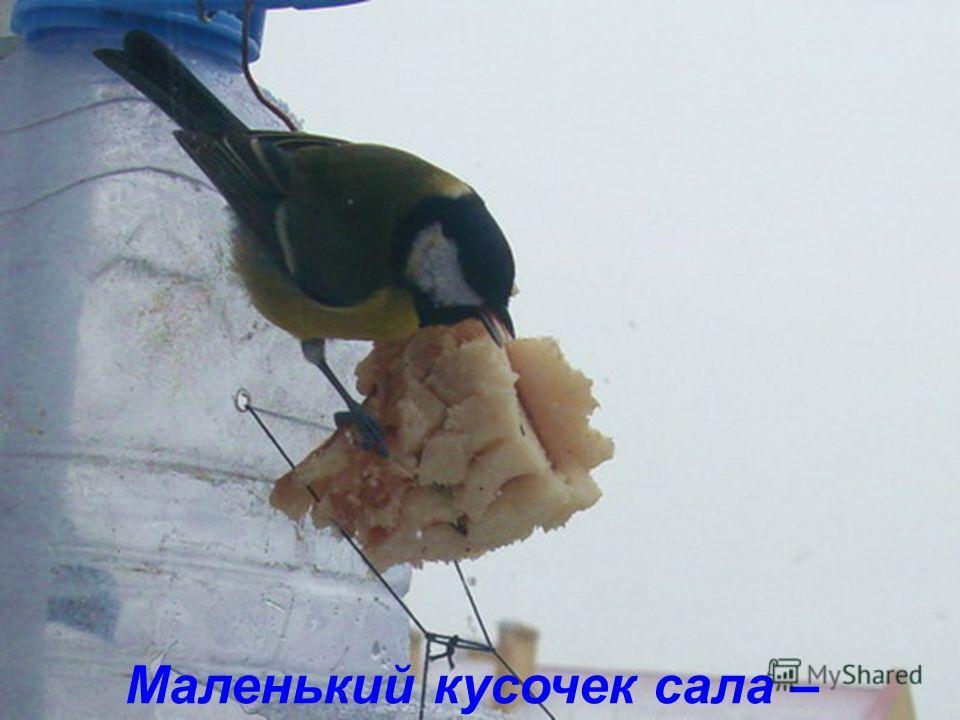 птичке угощение.