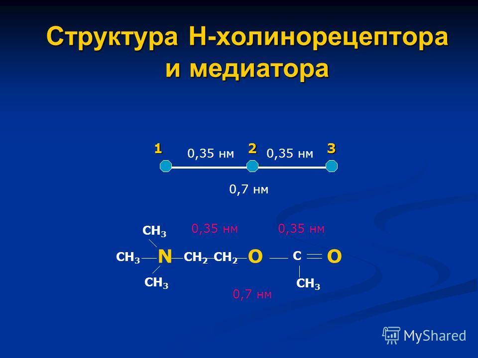 Структура Н-холинорецептора и медиатора 0,35 нм 0,7 нм 123 N СН 3 О СН 2 С О СН 3 0,7 нм 0,35 нм