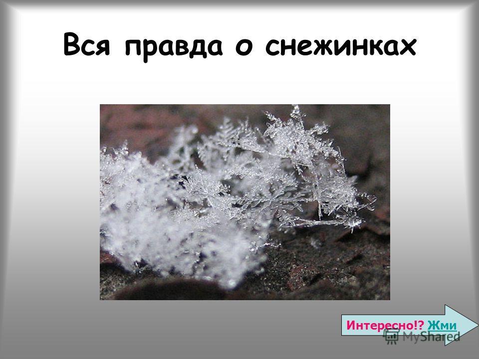 Вся правда о снежинках Интересно!? ЖмиЖми