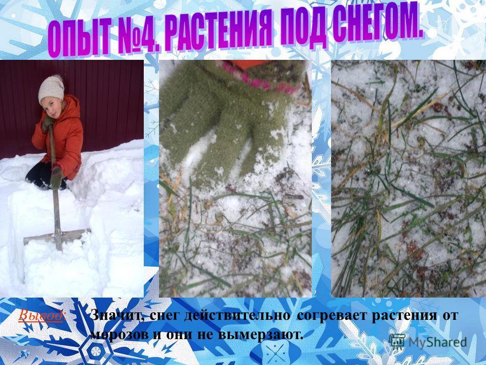 Вывод: Значит, снег действительно согревает растения от морозов и они не вымерзают.