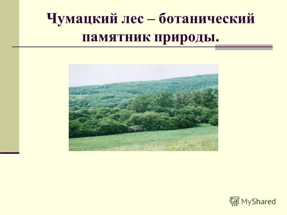 Чумацкий лес – ботанический памятник природы.