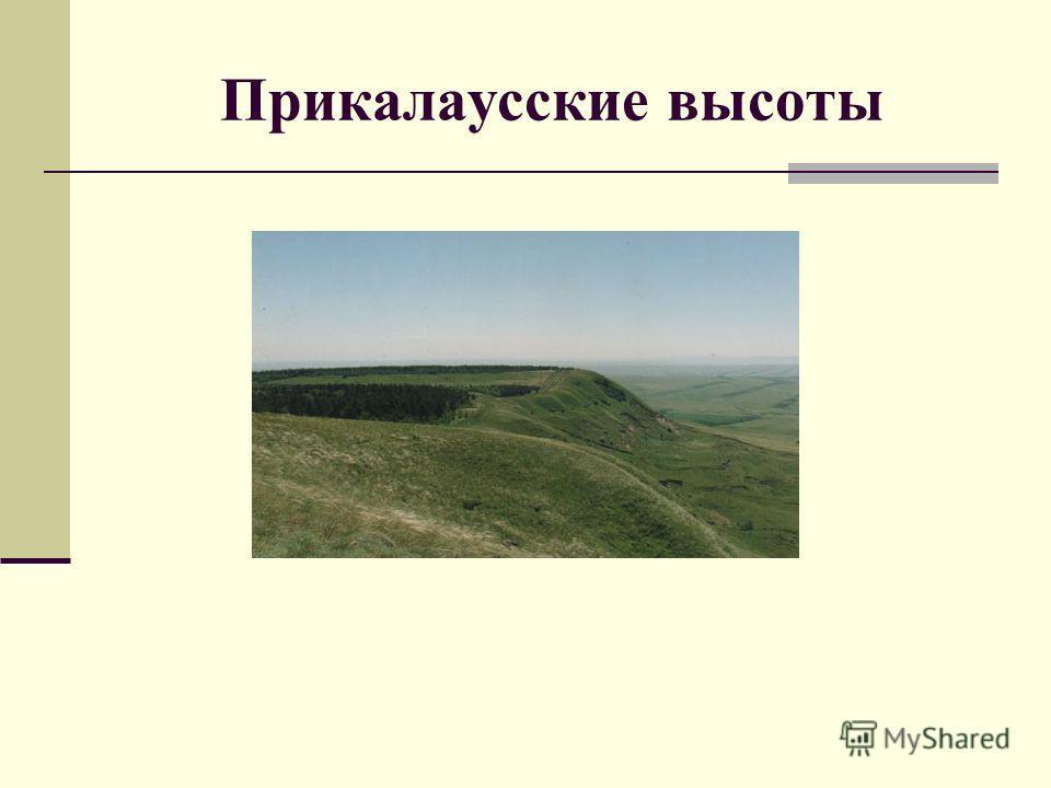 Прикалаусские высоты