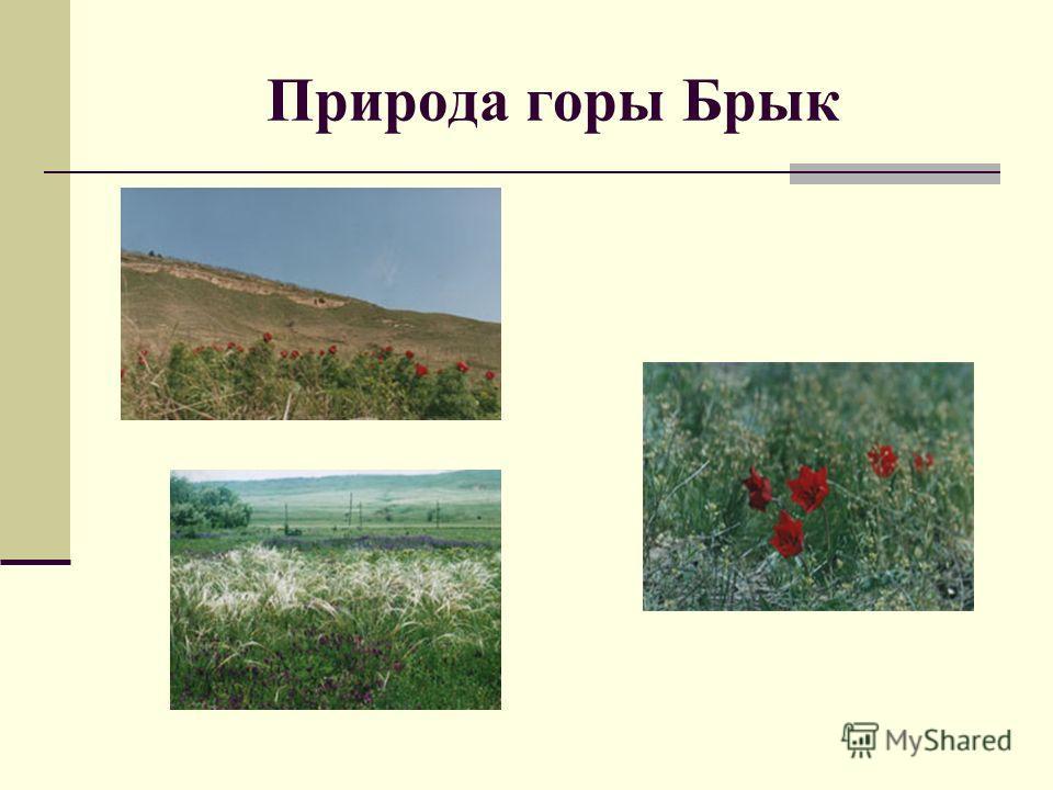 Природа горы Брык