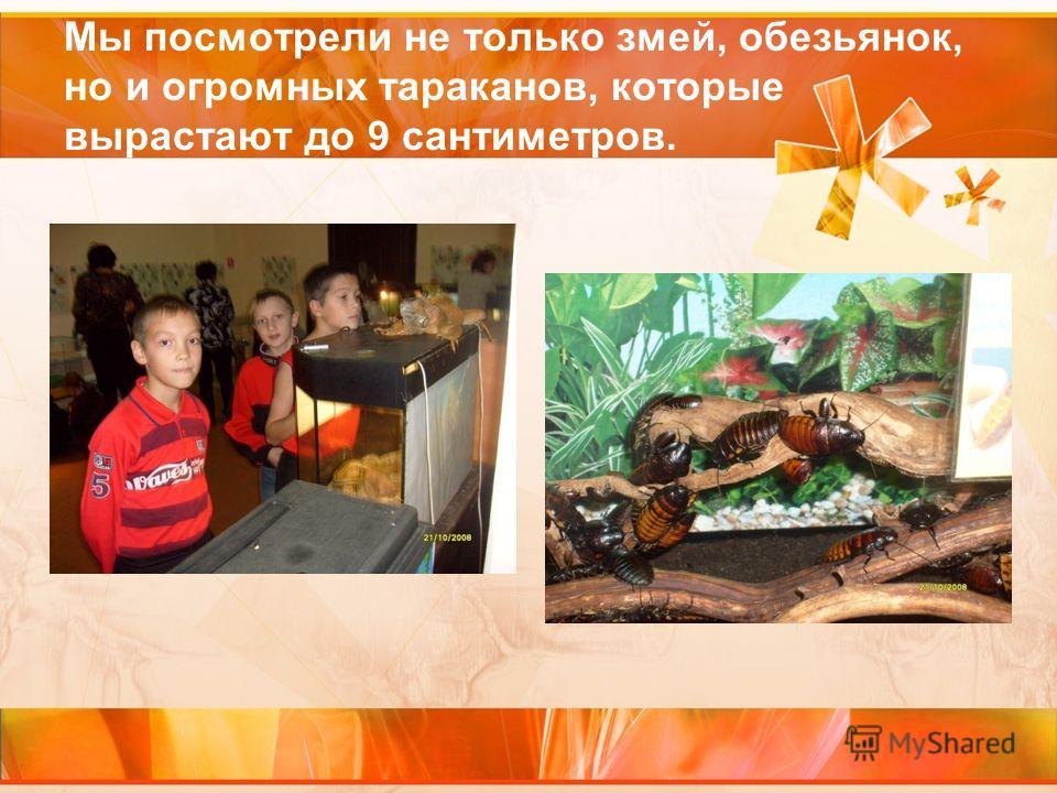 Мы посмотрели не только змей, обезьянок, но и огромных тараканов, которые вырастают до 9 сантиметров.