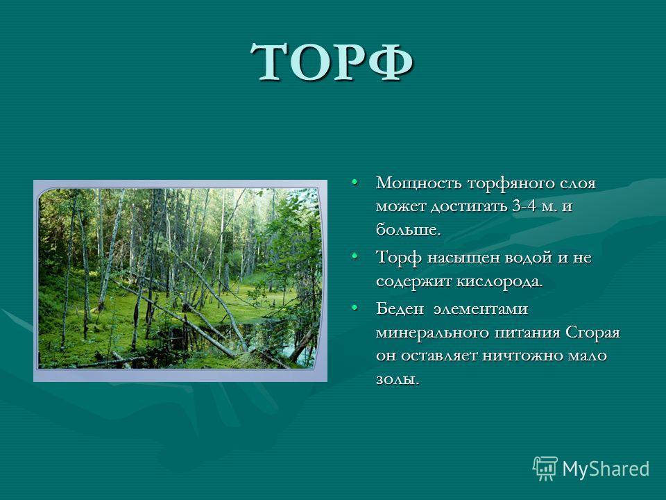 ТОРФ Мощность торфяного слоя может достигать 3-4 м. и больше. Торф насыщен водой и не содержит кислорода. Беден элементами минерального питания Сгорая он оставляет ничтожно мало золы.