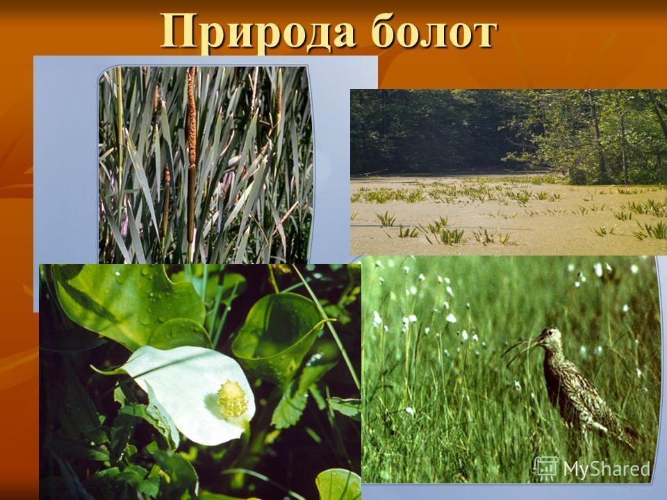 Природа болот