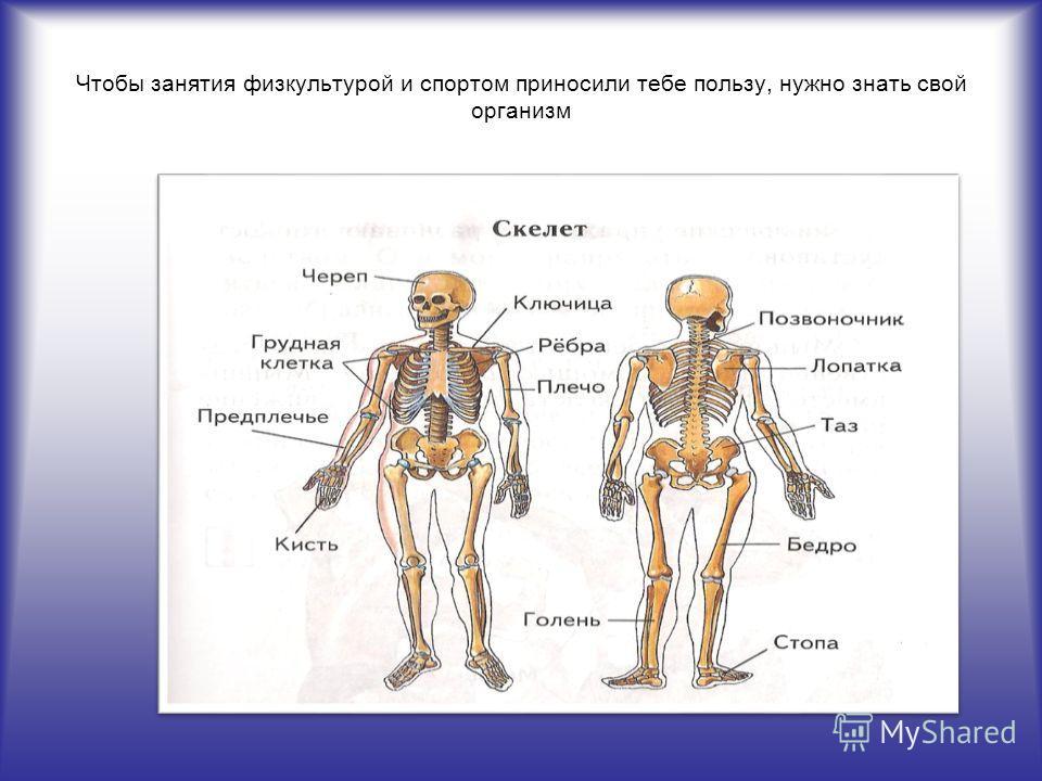 Чтобы занятия физкультурой и спортом приносили тебе пользу, нужно знать свой организм
