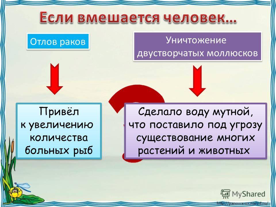 Отлов раков Уничтожение двустворчатых моллюсков Уничтожение двустворчатых моллюсков Привёл к увеличению количества больных рыб Привёл к увеличению количества больных рыб Сделало воду мутной, что поставило под угрозу существование многих растений и жи